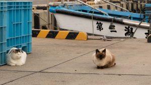 きさかた港猫